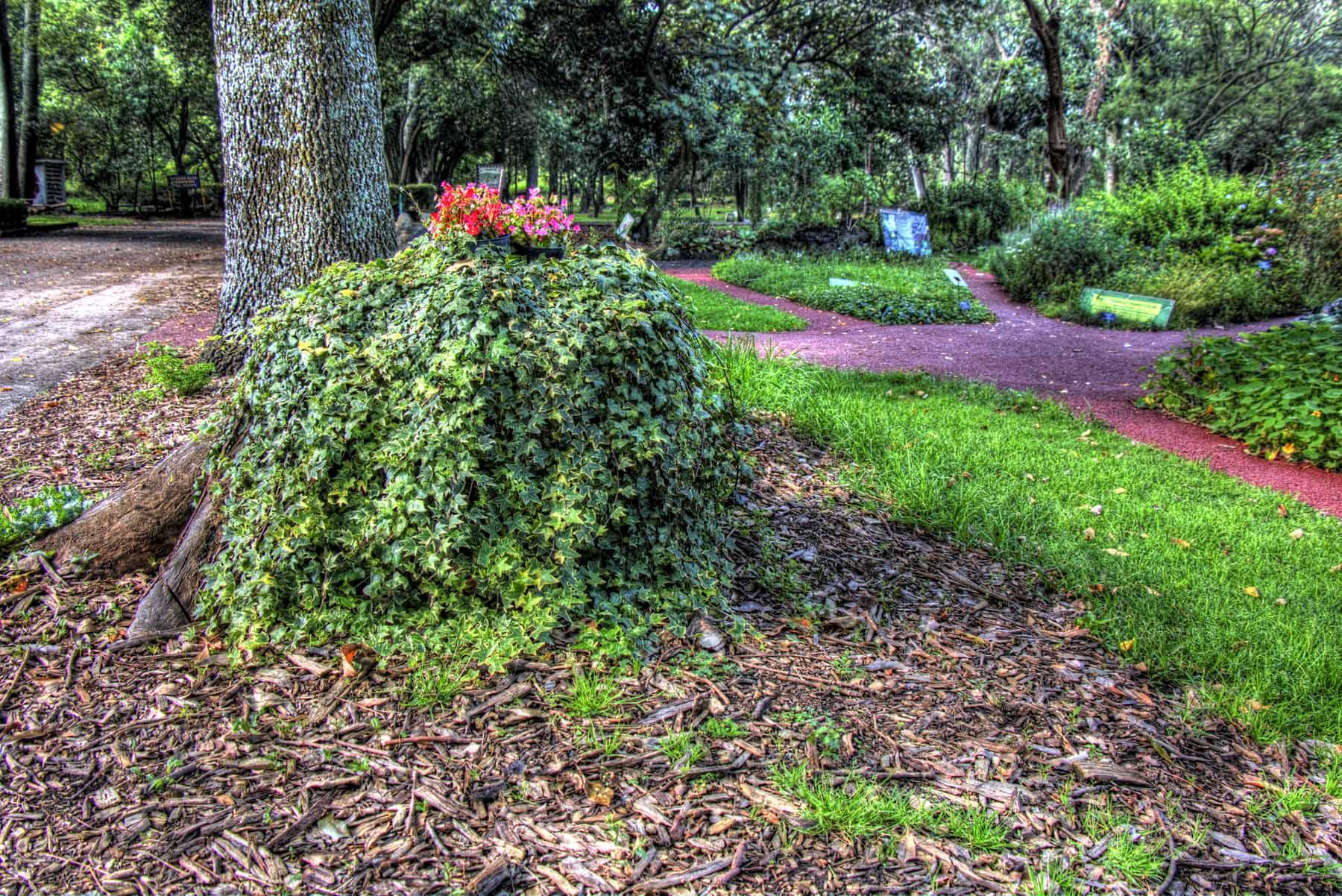 Jard n bot nico de la unam sansanphoto for Jardin botanico unam 2015